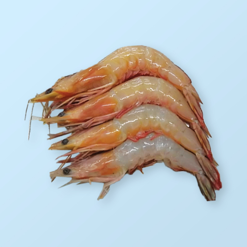 Sea White (White Shrimp)